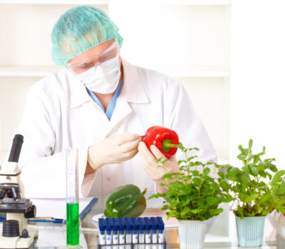 Researcher holding up a GMO vegetable. Genetically modified organism or GEO here transgenic plant is an plant whose genetic material has been altered using genetic engineering techniques known as recombinant DNA technology.